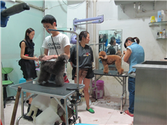 福州宠物美容师C级速成课程班