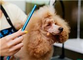 广州宠物美容培训班口碑好的有哪家