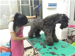 长沙宠物美容师c级进修培训班