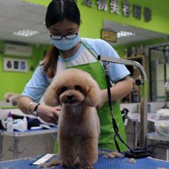 广州宠物美容C级一个月基础班