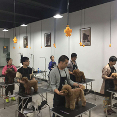 广州C级加长宠物美容培训班