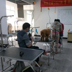 广州宠物C级精修美容培训班