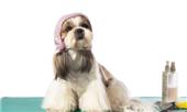 广州贵宾之家学宠物美容学费贵不贵