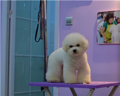 长沙宠物美容护理家庭兴趣培训班