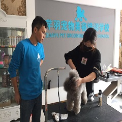 北京宠物美容师B级精研班课程培训班