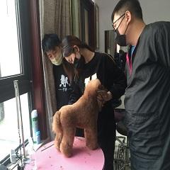 北京宠物美容师A级专修班课程培训班