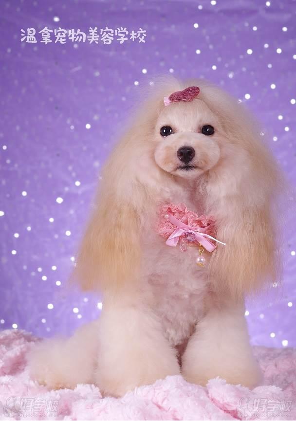 合肥温拿宠物美容学校 作品展示