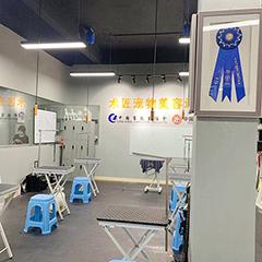 泉州宠物美容师C+B级培训班