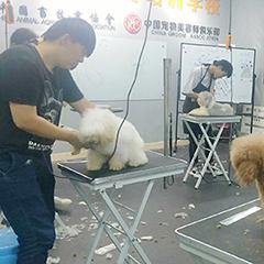 泉州宠物美容师C级精修培训班