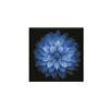 廣州全美瑜伽聯盟藍蓮花瑜伽培訓中心