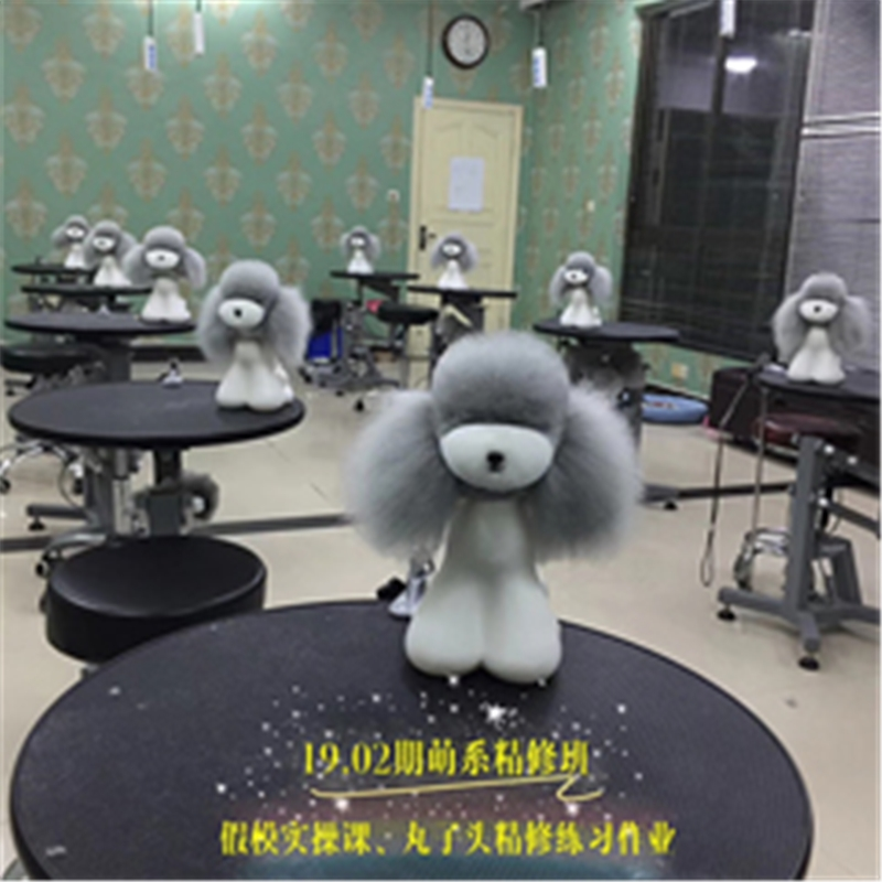 长沙宠物美容C级基础培训班