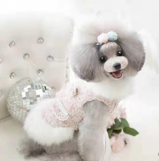 青岛宠物美容B级商业班