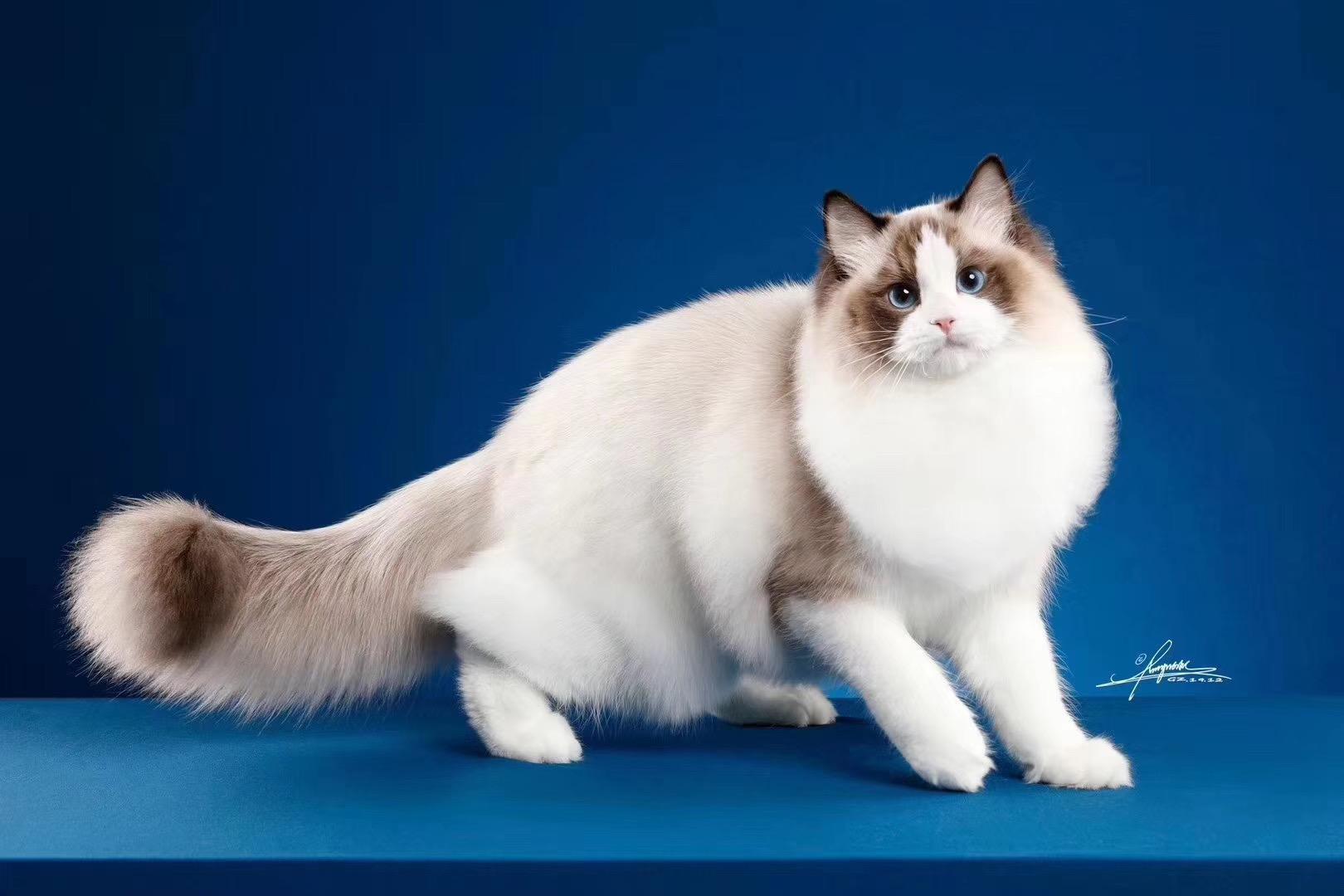 青岛宠物猫咪赛级洗护专业培训