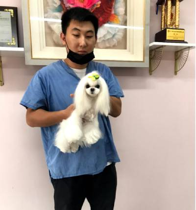 上海宠物门店C级精修班
