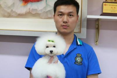上海宠物A级比熊专修班