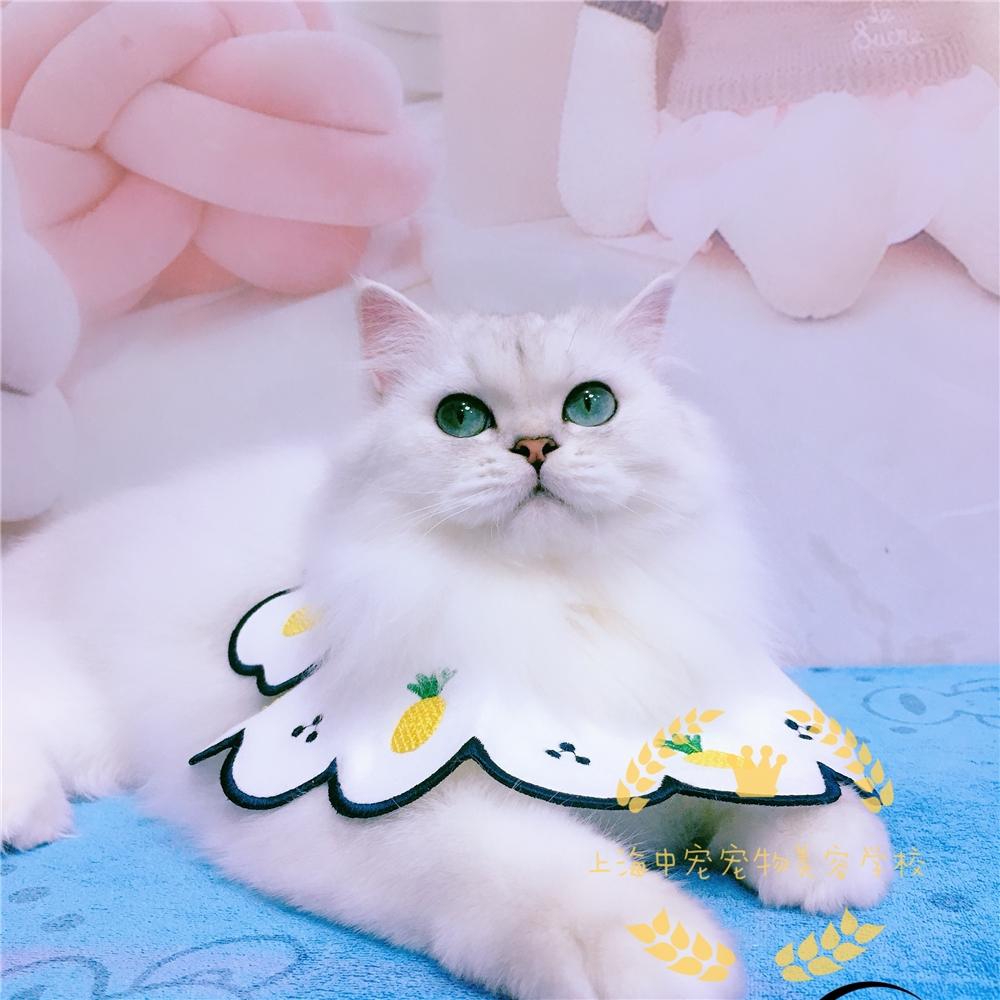上海宠物美容店铺实用猫洗护培训课程