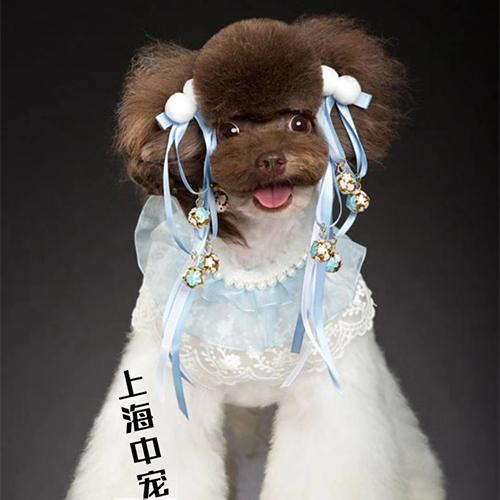 上海宠物美容中高级(CB)连读培训课