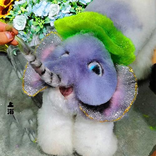 上海宠物美容创意A级培训课程