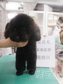 广州茉莉园宠物美容培训中心(学员作品)
